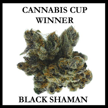 Black Shaman Cup Winner