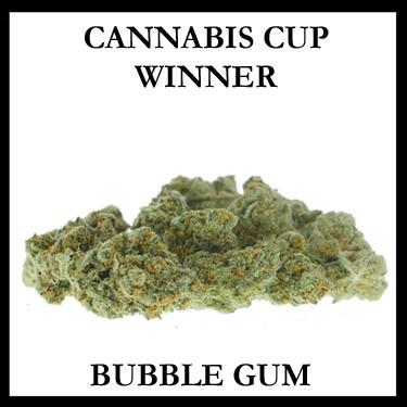 Bubble Gum Cup Winner