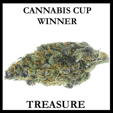 Treasure Cup Winner
